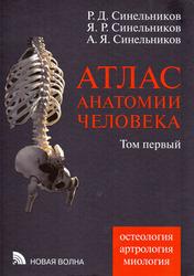 Атлас анатомии человека Синельников