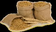 Зерно в мешках с доставкой в деревню от производителя