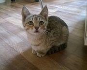 Котенок срочно ищет дом и любящих хозяев