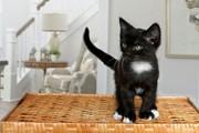 Котик ищет дом и любящих хозяев        .     .1