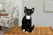 Котёнок ищет дом и любящих хозяев       .