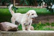 Красивая собачка ищет дом и любящих хозяев