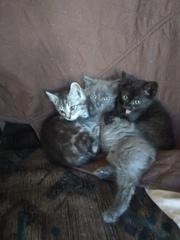 Котята ищут дом и любящих маму и папу                    .?