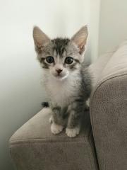 Маленькое чудо ищет дом и любящих хозяев           котик   .
