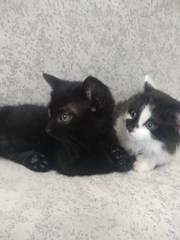 Котята ищут дома ............. котики красавчики