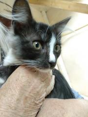 Котик ищет дом и любящих хозяев....