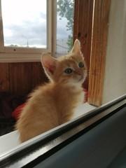 Рыжик ищет дом и любящих хозяев .....