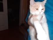 Внимание найден кот      .... Кремко