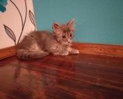 Кошечка в поиске дома и любящих хозяев