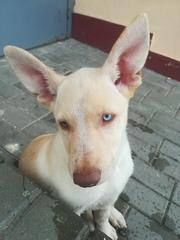 Красивый пес ищет дом и любящих хозяев 1
