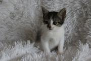 Котенок девочка ищет дом и любящих хозяев