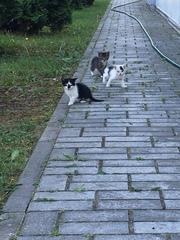 Чудесный котята ищут дом и любящих хозяев