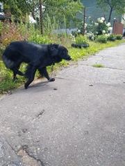 Внимание Найден а собака