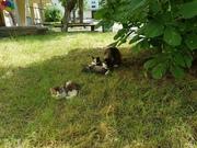 Котики  ищут дом и любящих хозяев