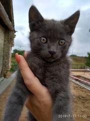 Милашки 2 котенка ищут дом и любящих хозяев
