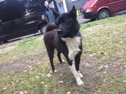 Внимание найдена собака р-он Клецкого