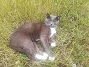 Котик ищет дом и любящею семью