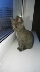 Котик милый сладкий ищет дом и любящих хозяев