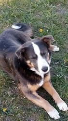 Собака ищет дом и любящих хозяев     4