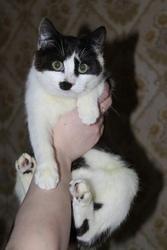 Котята ищут дом и любящих маму и папу         7