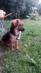 Собака ищет дом и любящих хозяев 1