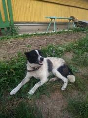 Собака срочно ищет дом или передержку